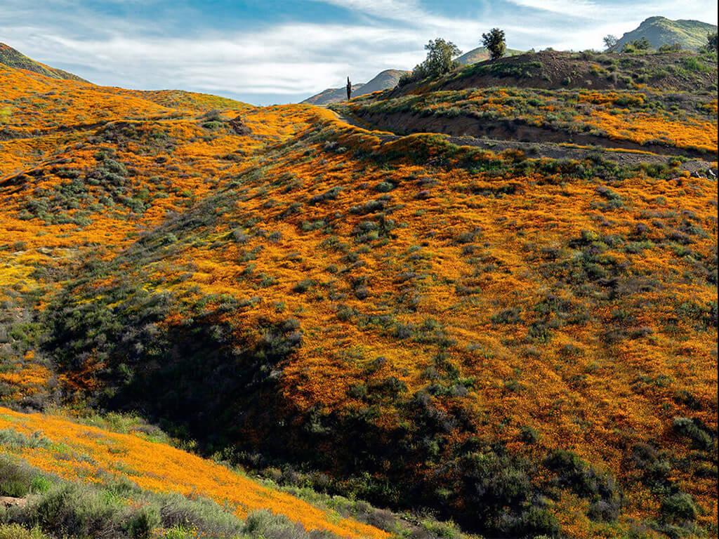 Elsinore Hills RV Park - gallery image